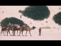 ラクダ4頭と犬1匹