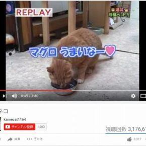 translation_tuna