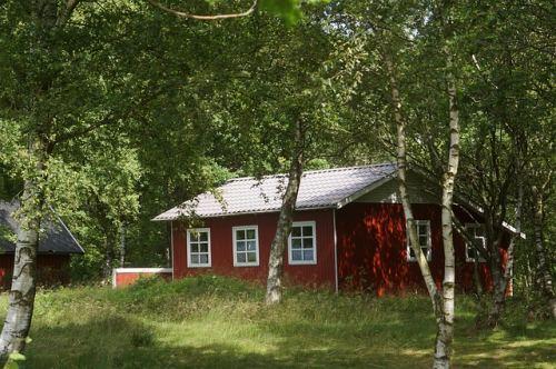 デンマークの白樺の木とコテージ